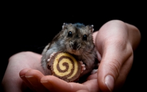 animals food hands hamsters black background 1920x1200 wallpaper_www.knowledgehi.com_38