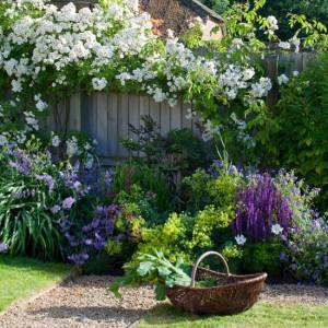 garden-plants3