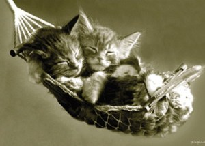 lgpp30342+kittens-asleep-in-a-hammock-sleeping-kittens-poster