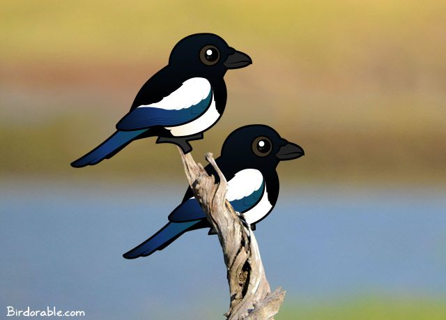 two-magpies
