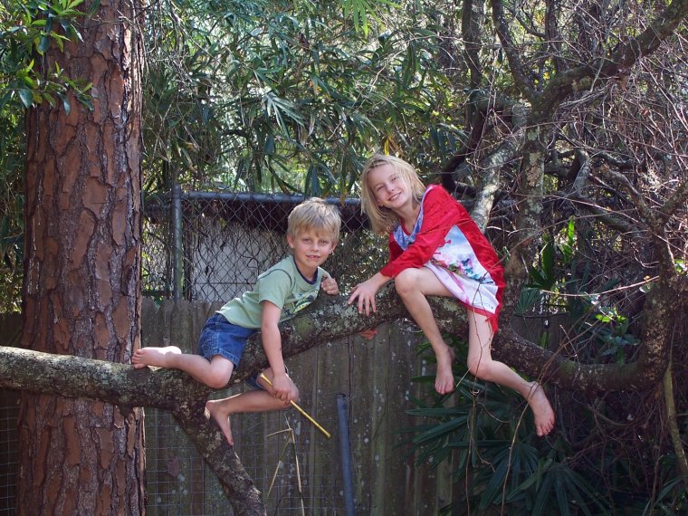 monkeys-in-a-tree-1438532